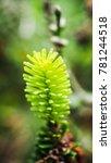 beautiful plant closeup shot | Shutterstock . vector #781244518