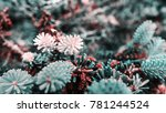 beautiful plant closeup shot | Shutterstock . vector #781244524