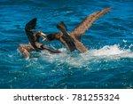 nz petrels fighting of the... | Shutterstock . vector #781255324