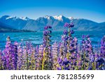 los alerces national park ... | Shutterstock . vector #781285699