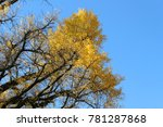bright fall color of the... | Shutterstock . vector #781287868
