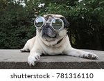 an adorable pug sitting in a... | Shutterstock . vector #781316110