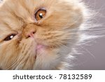 close up portrait of a funny... | Shutterstock . vector #78132589