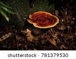 Large Reishi Mushroom In Fores...