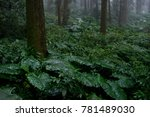 underneath the forest | Shutterstock . vector #781489030