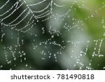 spider web with water droplets   Shutterstock . vector #781490818