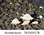 sea shells   black stones sea... | Shutterstock . vector #781509178