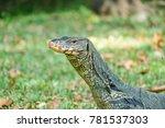 closeup giant lizard head | Shutterstock . vector #781537303