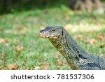 closeup giant lizard head | Shutterstock . vector #781537306