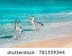 beautiful white herons against... | Shutterstock . vector #781559344