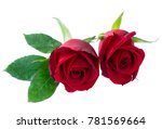 Stock photo red blooming roses 781569664