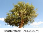 isolate tree on the field blue... | Shutterstock . vector #781610074