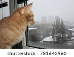 Stock photo closeup picture of a cute cat looking through the window 781642960