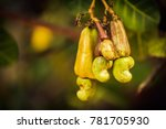 cashew nut and fruit on blurry... | Shutterstock . vector #781705930