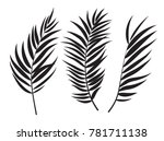 beautifil palm tree leaf ... | Shutterstock .eps vector #781711138