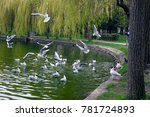 feeding gulls on lake in spring ... | Shutterstock . vector #781724893