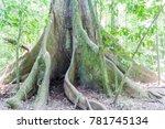 ceiba tree in national park... | Shutterstock . vector #781745134