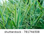 background with green striped... | Shutterstock . vector #781746508