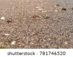 background with sea sand close... | Shutterstock . vector #781746520