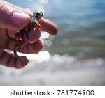beautiful colorful frog closeup | Shutterstock . vector #781774900