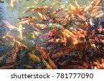 koi fish  koi or more... | Shutterstock . vector #781777090