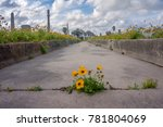 yellow wildflower growing in a... | Shutterstock . vector #781804069
