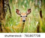 deer in long grass | Shutterstock . vector #781807738