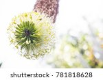 beautiful bonsai tree in the...   Shutterstock . vector #781818628