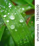 droplet on the green leaf of... | Shutterstock . vector #781863100