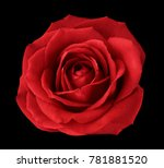 red rose on the black  isolated ... | Shutterstock . vector #781881520