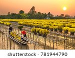 sa dec flower village   sa dec... | Shutterstock . vector #781944790