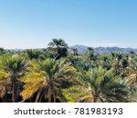 Palm Trees In Nizwa In Oman