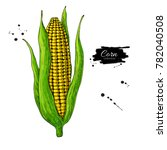 corn cob hand drawn vector... | Shutterstock .eps vector #782040508