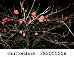 rowan berries on a tree on a... | Shutterstock . vector #782055256