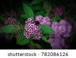 bumblebee pollinates flowers | Shutterstock . vector #782086126