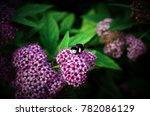 bumblebee pollinates flowers | Shutterstock . vector #782086129