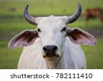 close up face horn male cow in... | Shutterstock . vector #782111410
