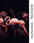 portrait of flamingo in the dark | Shutterstock . vector #782153248