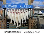 halibuts caught at seward... | Shutterstock . vector #782273710