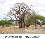 baobab in africa | Shutterstock . vector #782323504