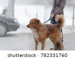 Stock photo woman walking with dog in winter at snowfall through the streets in the city 782331760