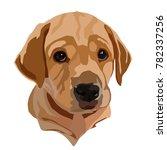 puppy of the golden labrador... | Shutterstock .eps vector #782337256