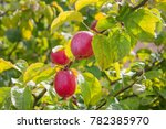 close up of ripe red apple on... | Shutterstock . vector #782385970