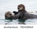 sea otter with a baby   Shutterstock . vector #782428063