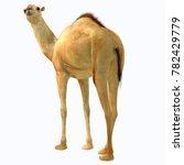 camelops hesternus tail 3d... | Shutterstock . vector #782429779
