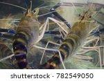 huge fresh shrimps | Shutterstock . vector #782549050
