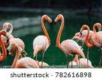 flock of beautiful pink...   Shutterstock . vector #782616898