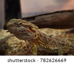 close up chameleon   brown... | Shutterstock . vector #782626669