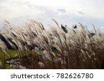 Decorative Grass Against The Sky