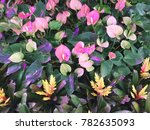 modern garden design | Shutterstock . vector #782635093